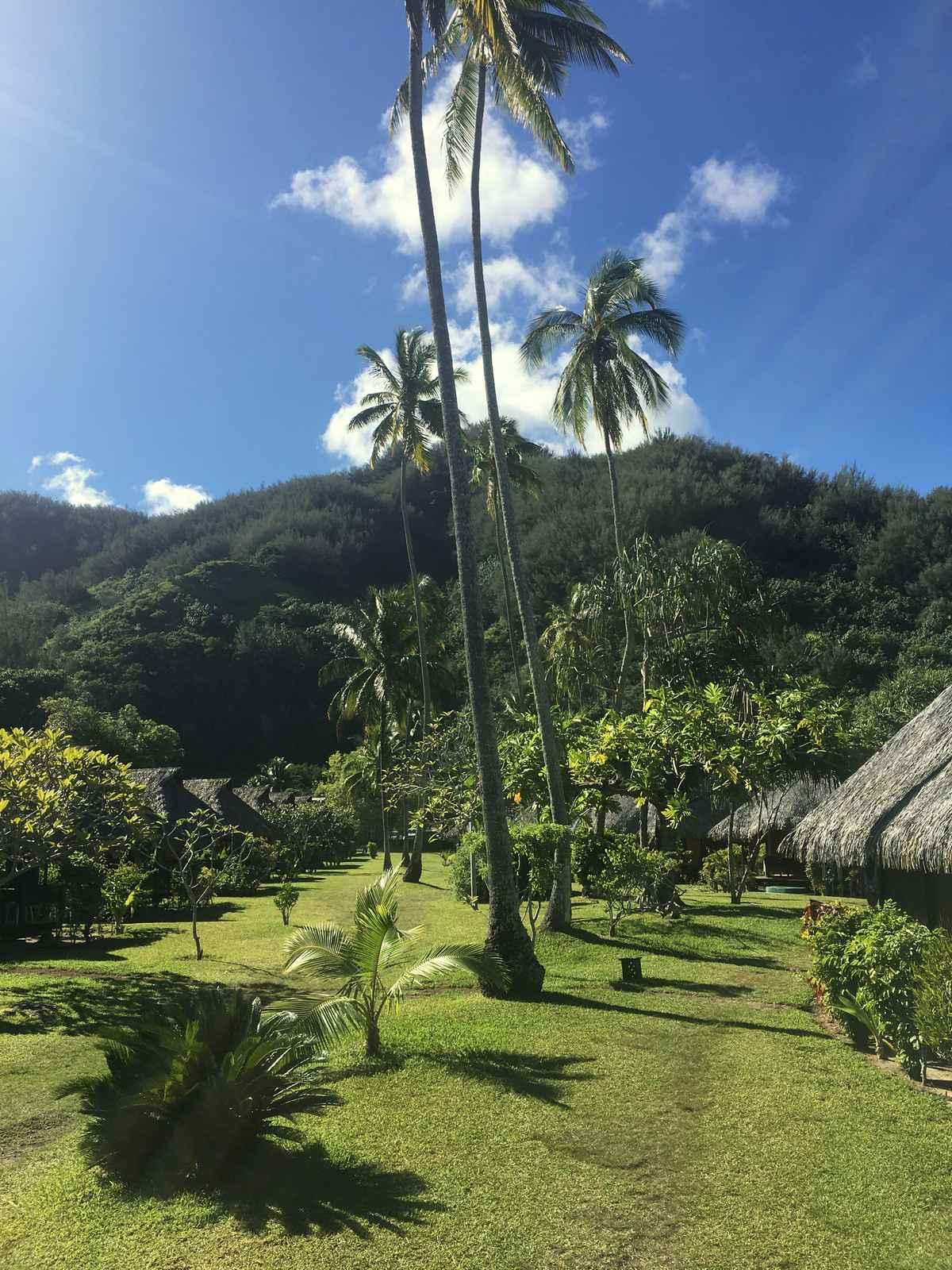 le jardin tropical de l'hotel hibiscus à Moorea