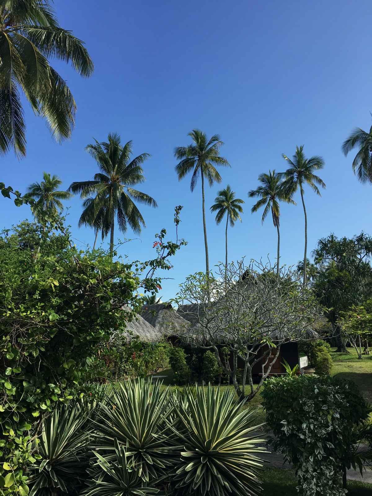 le jardin tropical de votre hotel à Moorea