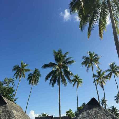 toits en pandanus, cocotiers et ciel bleu à Moorea en Polynésie